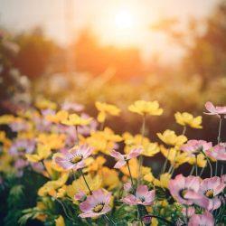 Erfolgreich Gärtnern in Zeiten des Klimawandels