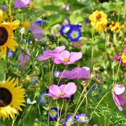 flower-meadow-3598555_1920_web